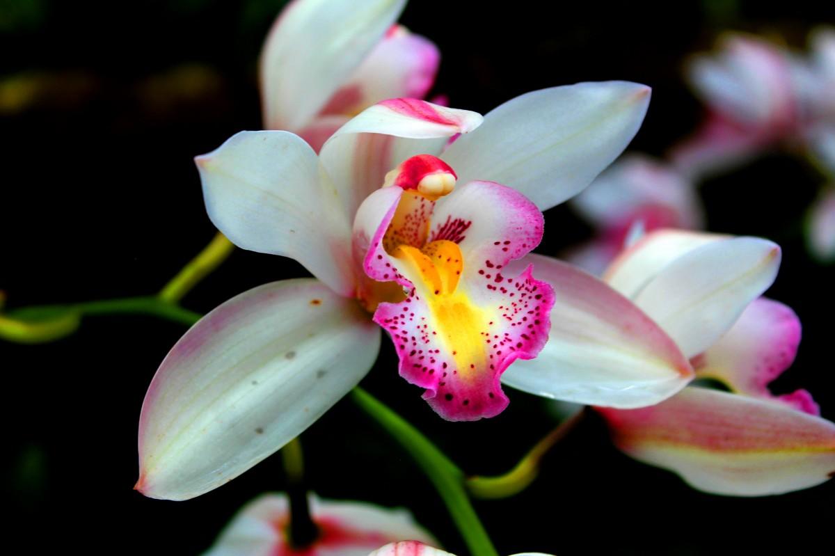 plantas de los bosques tropicales