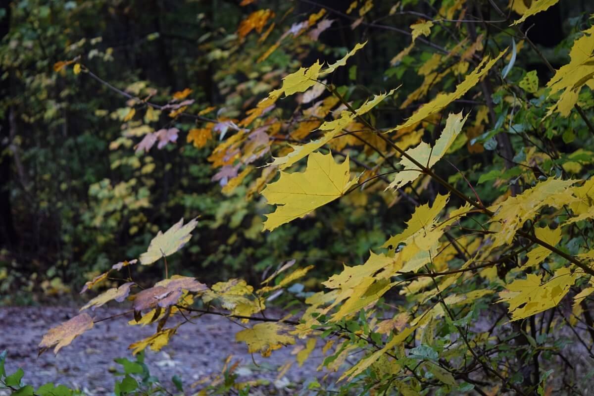bosque caducifolio flora