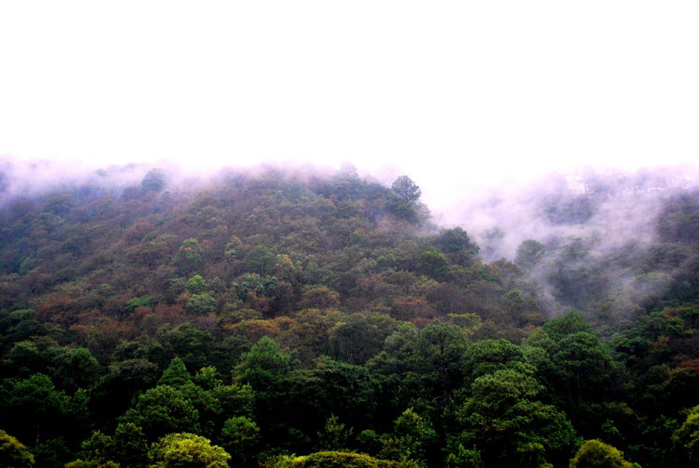 Bosques de pino encino