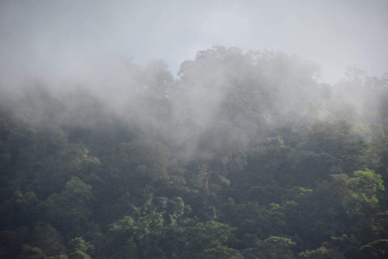 Bosques nublados, bosque de neblina, bosque niebla