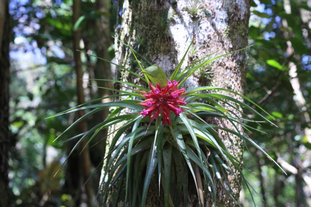 bosque nublado flora