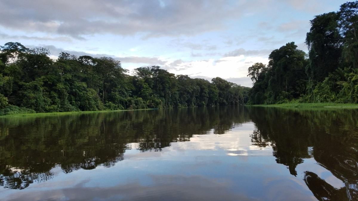 caracteristicas de los bosques tropicales