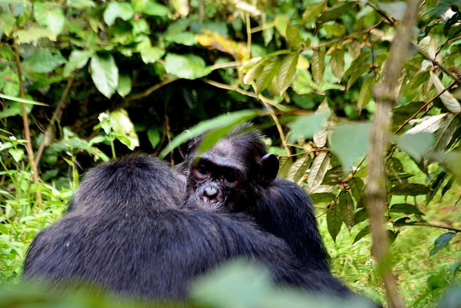 bosques tropicales flora y fauna