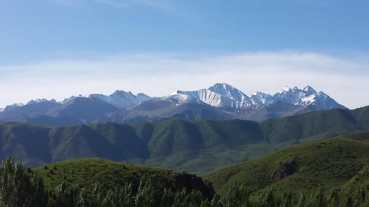 imagenes de bosque andino