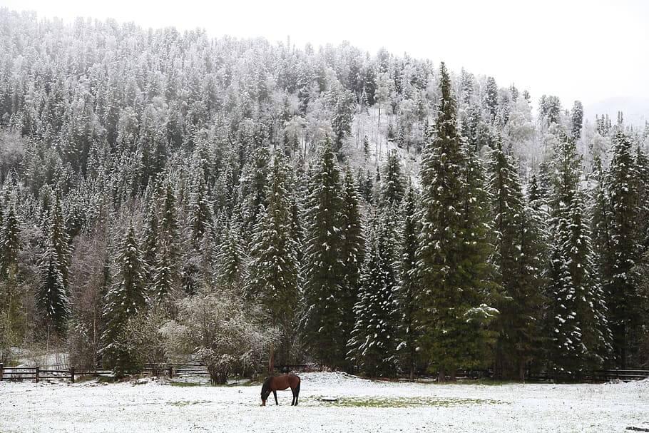bosques boreales de la taiga