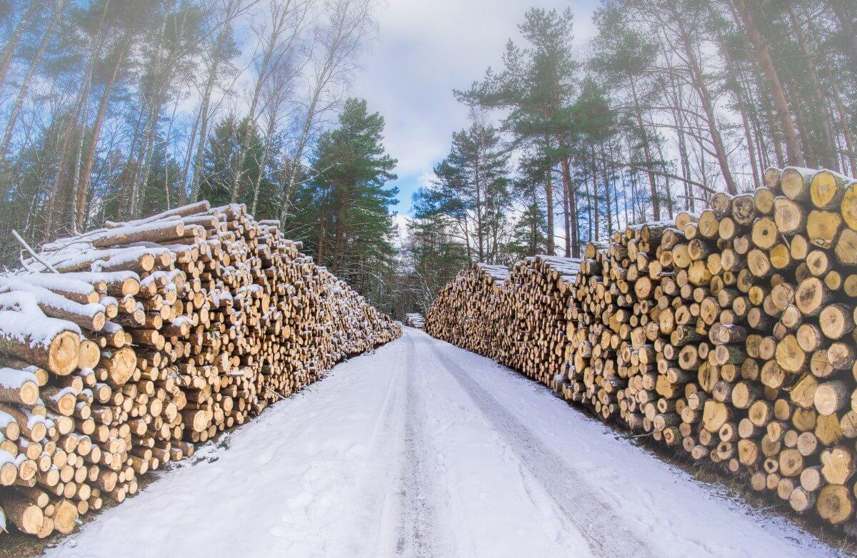 bosque frió talado
