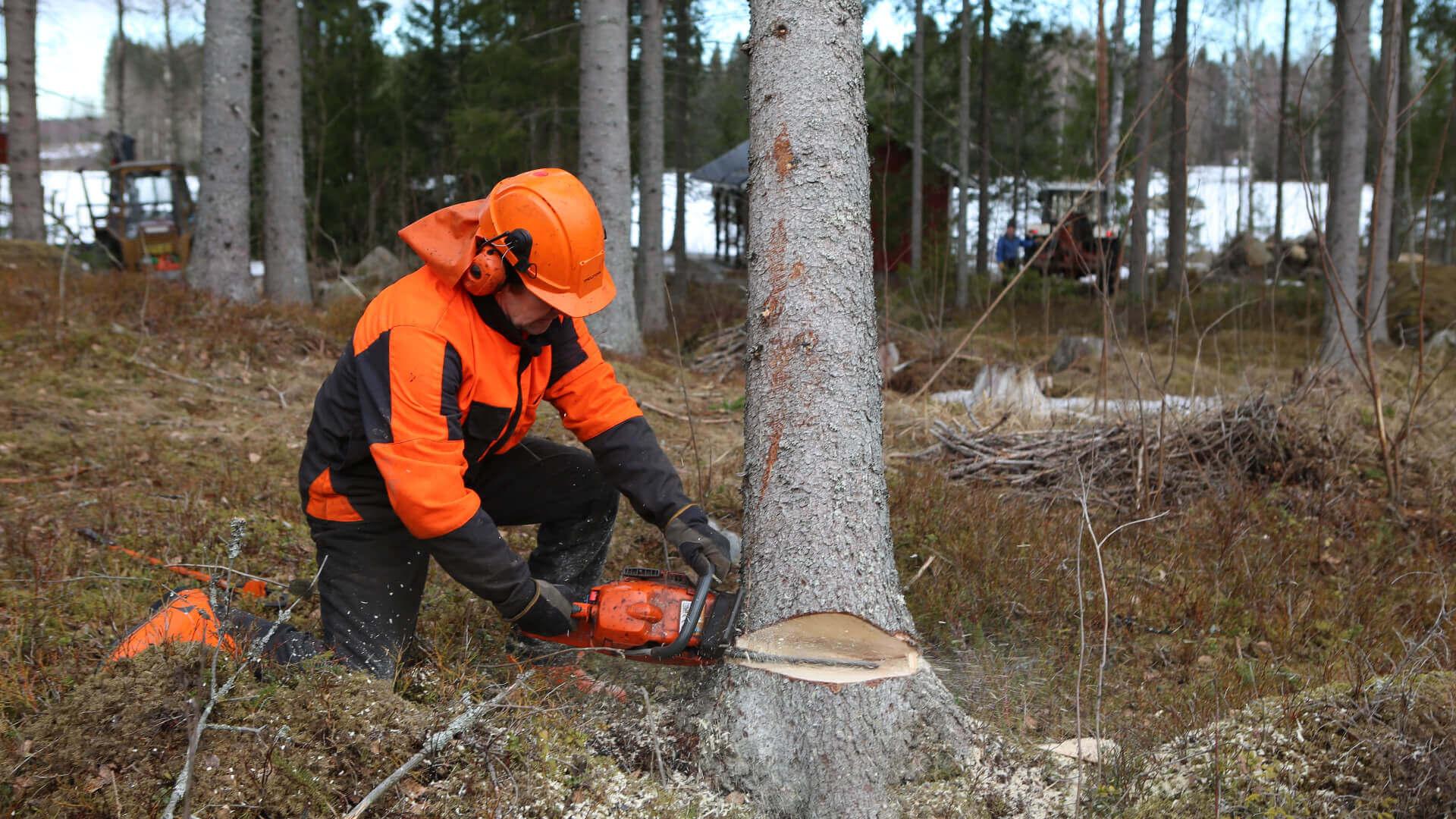 deforestación de bosques del mundo