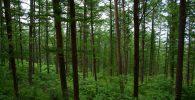 selva seca bosque seco o bosque deciduo