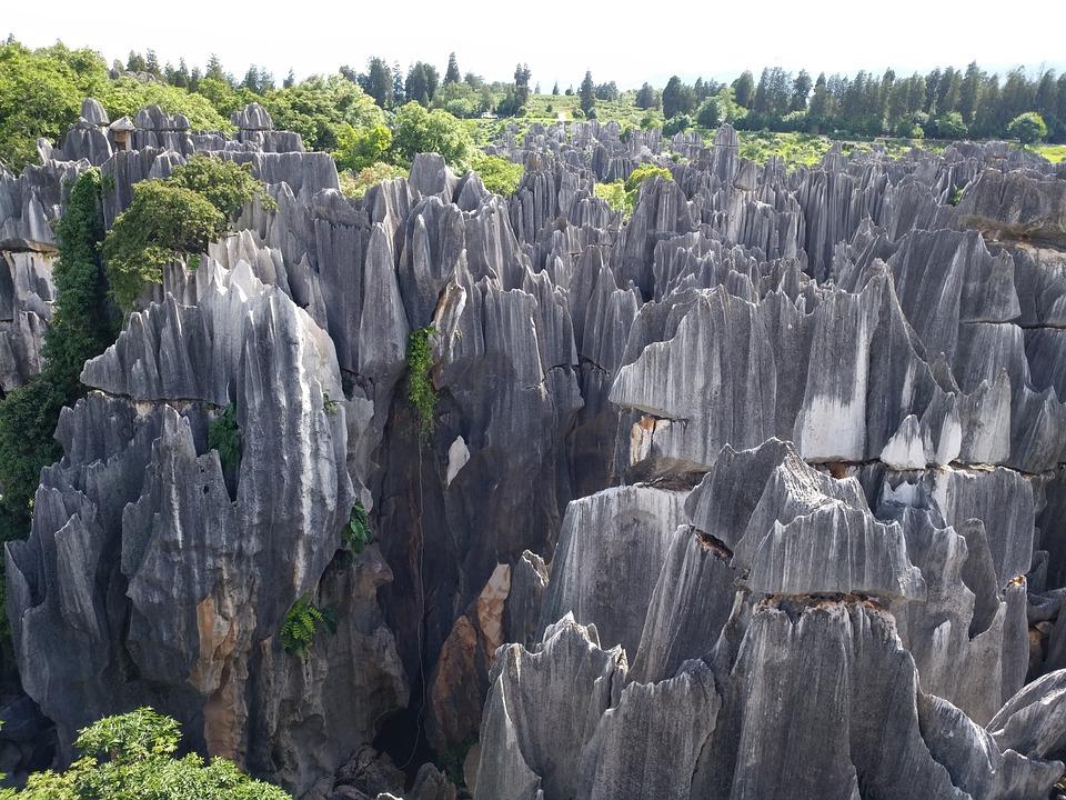 Bosque de piedra