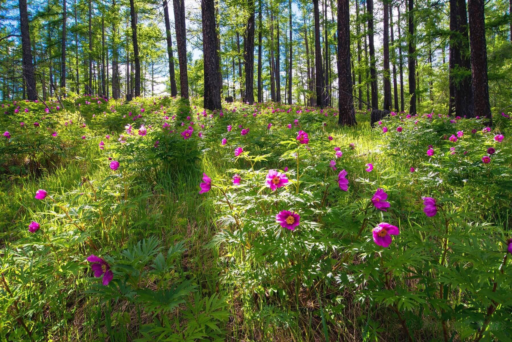 vegetación de los bosques del mundo